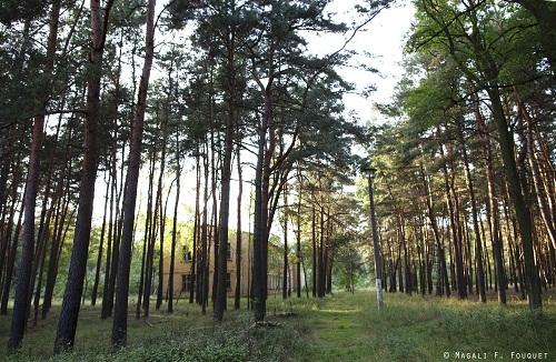 2_forêt