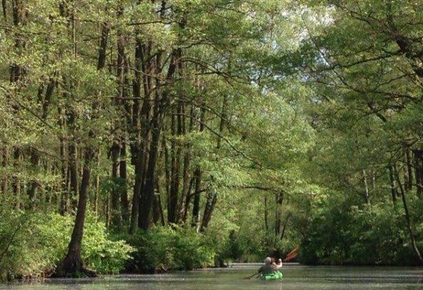 Faire du Kayak dans une forêt à Berlin