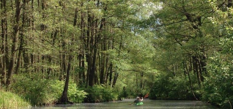 Kayak à Spreewald